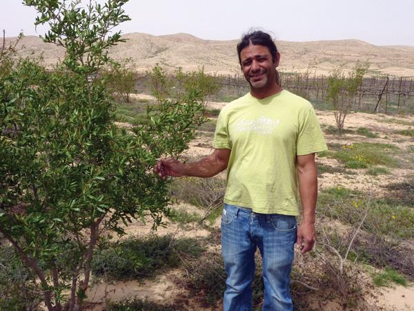 Moshe Zohar, who grew these pomegranate trees on his farm in the Negev, is facing eviction from the same government agencies that granted him the land.