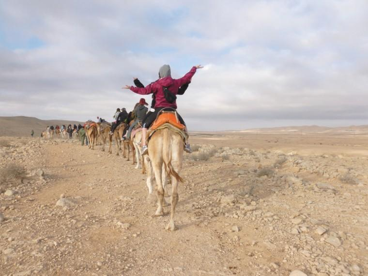 Students ride on camels in the Negev during a recent St. Louis Hillel Taglit-Birthright Israel trip.