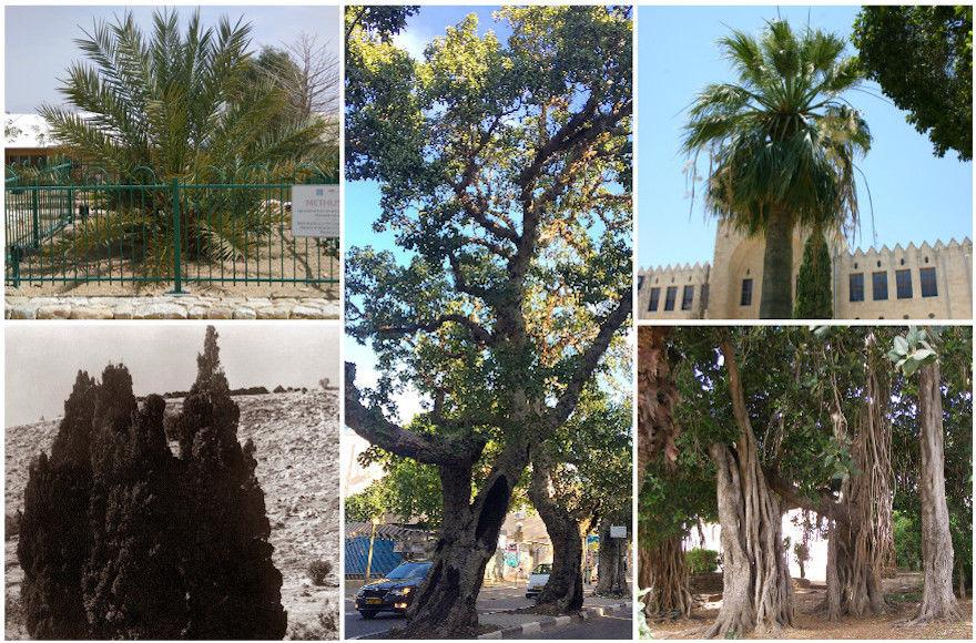 For+Tu+b%E2%80%99Shvat%2C+5+of+Israel%E2%80%99s+must-see+trees