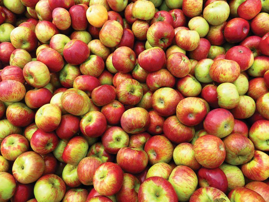 A+trip+to+the+orchard+for+apple+picking+is+a+family+favorite+for+celebrating+the+Jewish+New+Year.+%C2%A0%C2%A0