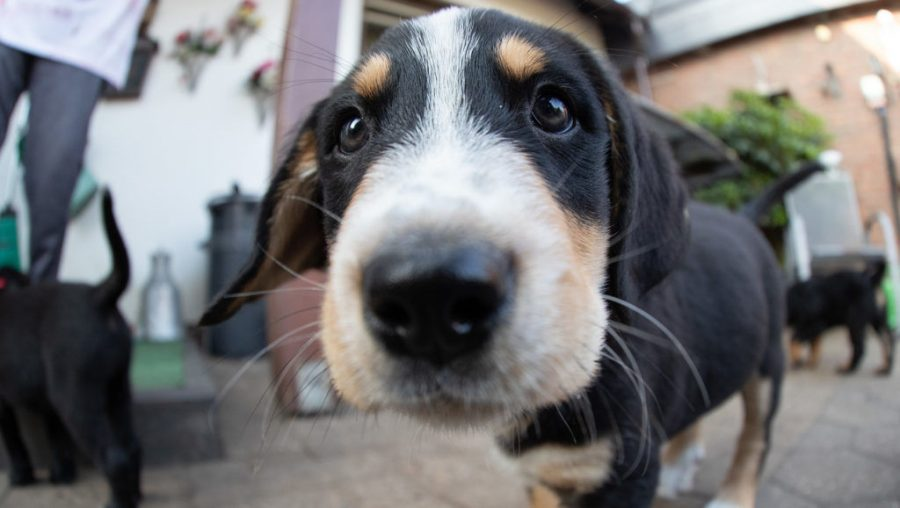 A+puppy+dog+looks+into+the+camera+in+Germany%2C+July+12%2C+2019.+Photo%3A+Friso+Gentsch%2Fpicture+alliance+via+Getty+Images