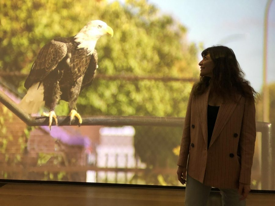 Israeli artist Dana Levy brought rescue birds to north St. Louis and shot video of them at and around abandoned buildings for her new exhibit at the St. Louis Art Museum.
