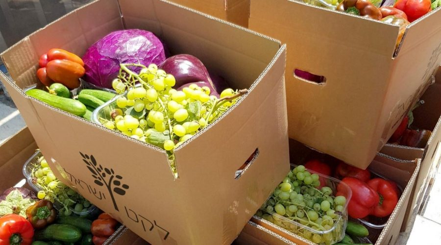 The COVID pandemic saw a dramatic increase in the availability of fresh produce to be rescued: the fruits and vegetables that hotels, restaurants and caterers could not use. (Courtesy of Leket)