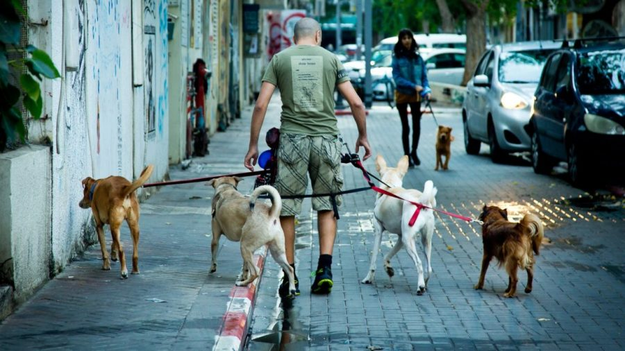 Israeli company giving many on the autism spectrum a new leash on life