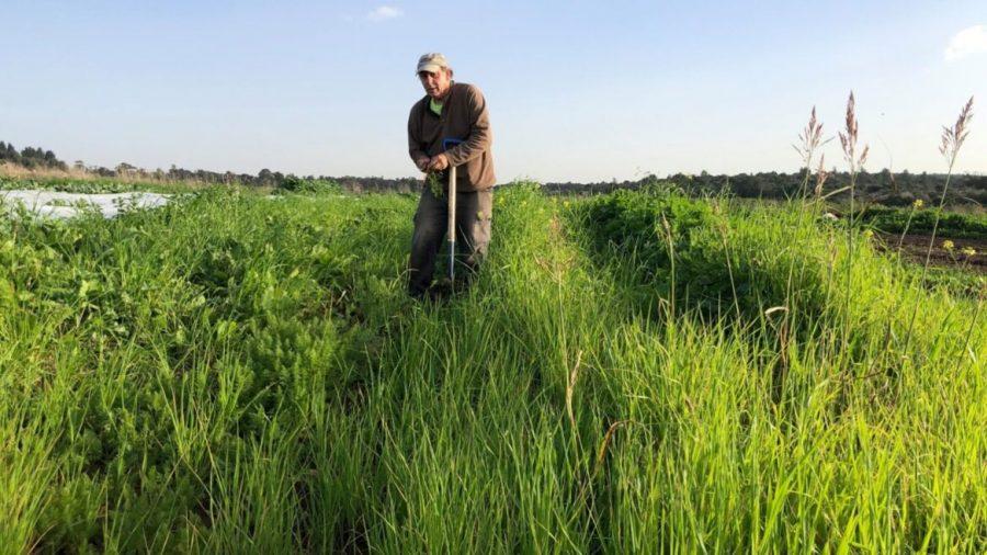 Ben+Rosenberg+will+let+his+organic+farm+rest+during+the+sabbatical+year.+Photo+courtesy+of+Ben%E2%80%99s+Farm