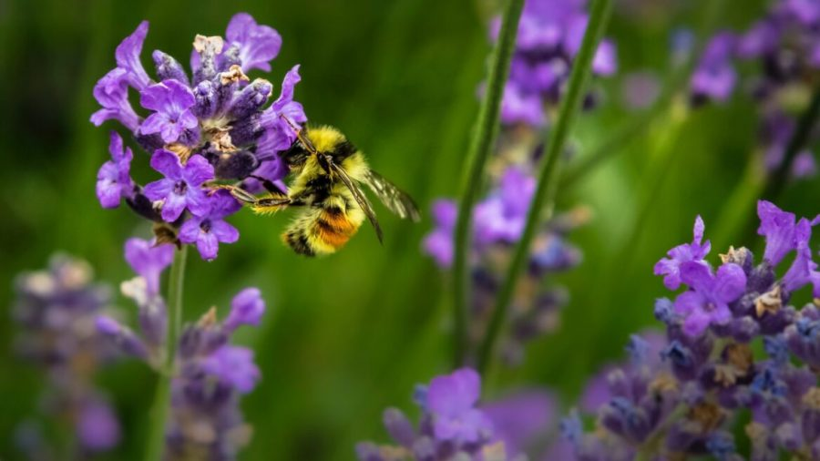 The world's bee population is dying out due to a lethal combination of modern demand and natural stresses. Photo by Jenna Lee on Unsplash