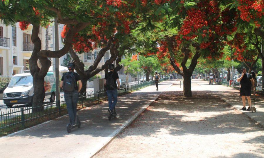 The tree-shaded Rothschild Boulevard in Tel Aviv. Photo by Anna Wachspress